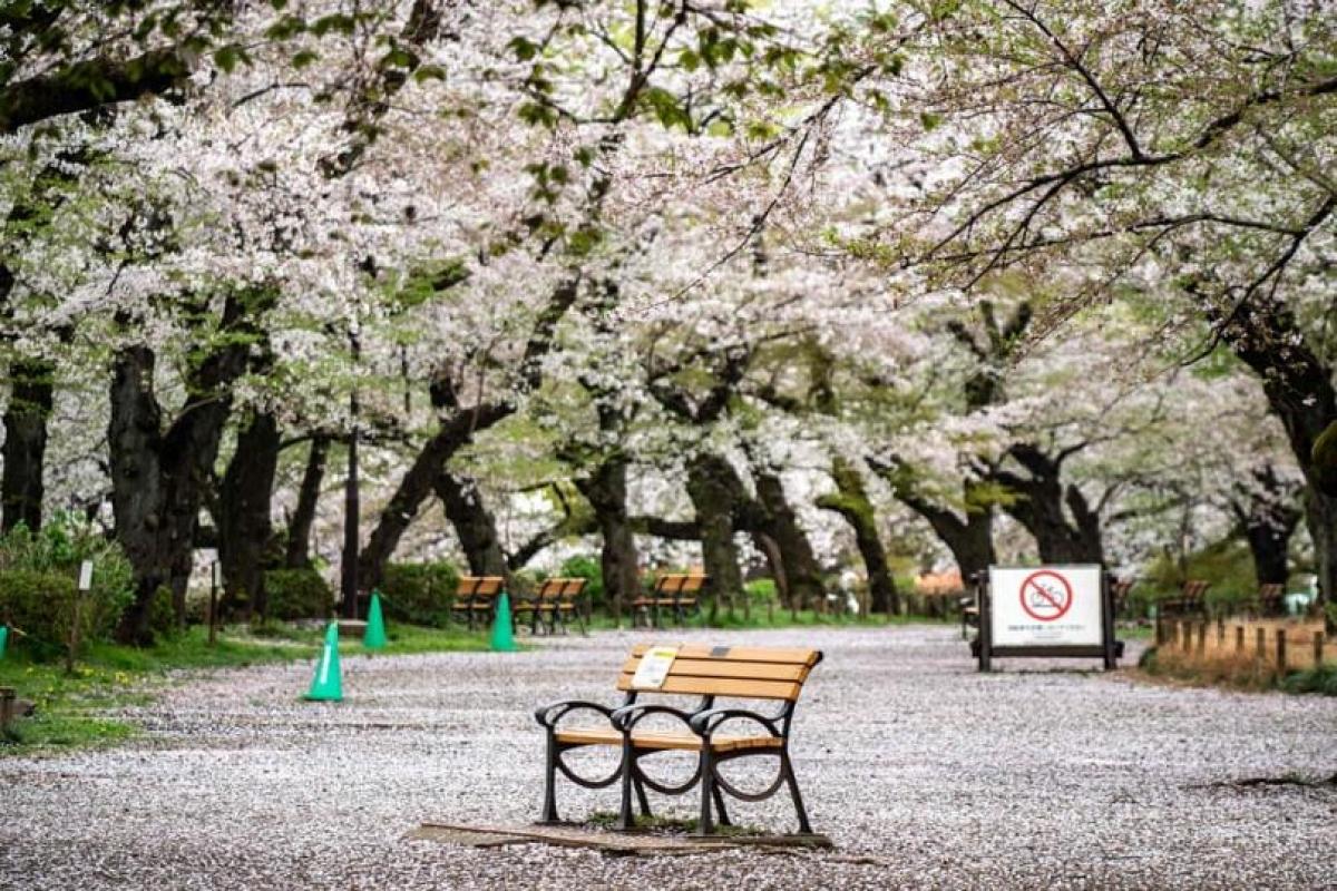 Hình ảnh trống trải trong Công viên Inokashira ở Tokyo, Nhật Bản. Nguồn: AFP