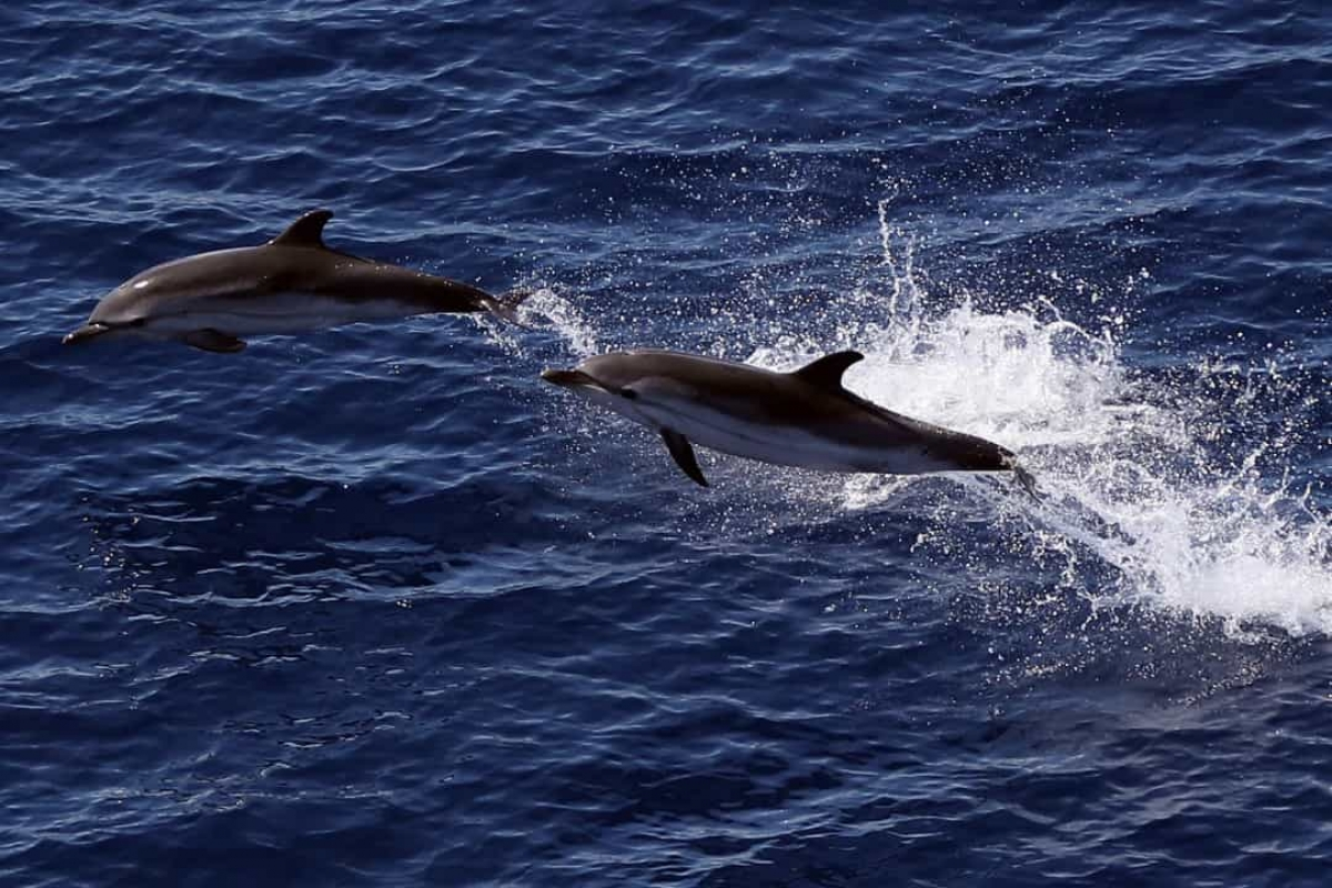 Những chú cá heo có mạng lưới quan hệ xã hội phức tạp. Các nhà khoa học phát hiện ra rằng chúng thực sự kết bạn với những chú cá heo khác. Ở khía cạnh này, chúng khá giống với con người khi thích chơi cùng một số con cá heo nhất định so với những con khác.