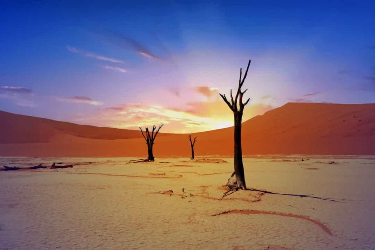 Những thân cây Acacia đã chết tạo nên khung cảnh độc đáo ở Dead Vlei, Namibia. Các nhiếp ảnh gia thường tìm đến đây chụp ảnh để ghi lại vẻ đẹp tương phản giữa những cồn cát cam đậm và những thân cây khô cháy.