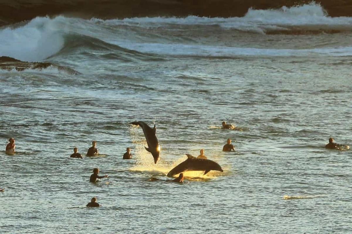 Những chú cá heo định vị bằng âm thanh. Chúng tạo ra âm thanh lách cách và sau đó nghe tiếng vang vọng lại khi những âm thanh này truyền đến các vật thể để xác định môi trường xung quanh và phương hướng.