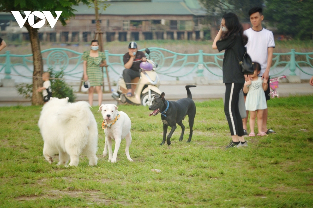 Không hiếm gặp cảnh này ở các công viên, nơi công cộng (ảnh: Phạm Nhi)