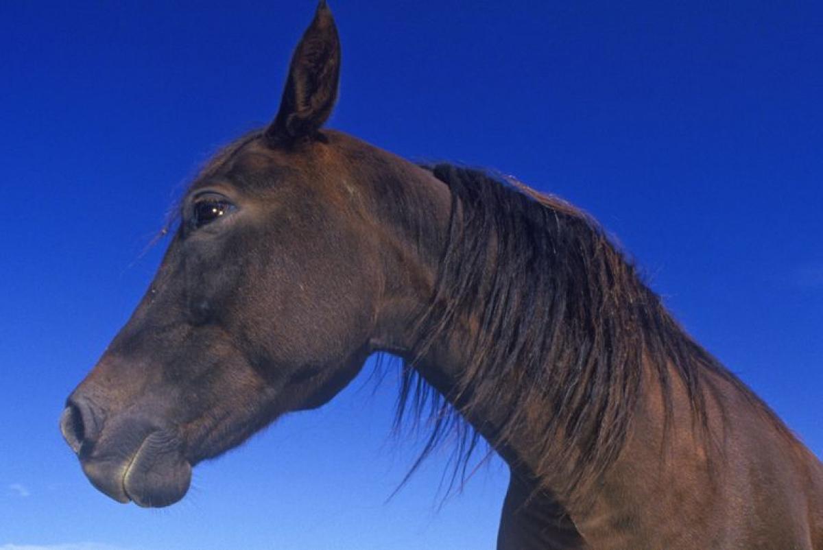 Vermont: Ngựa Morgan.Giống ngựa này có nguồn gốc từ Vermont và trở thành biểu tượng động vật có vú của tiểu bang vào năm 1961.