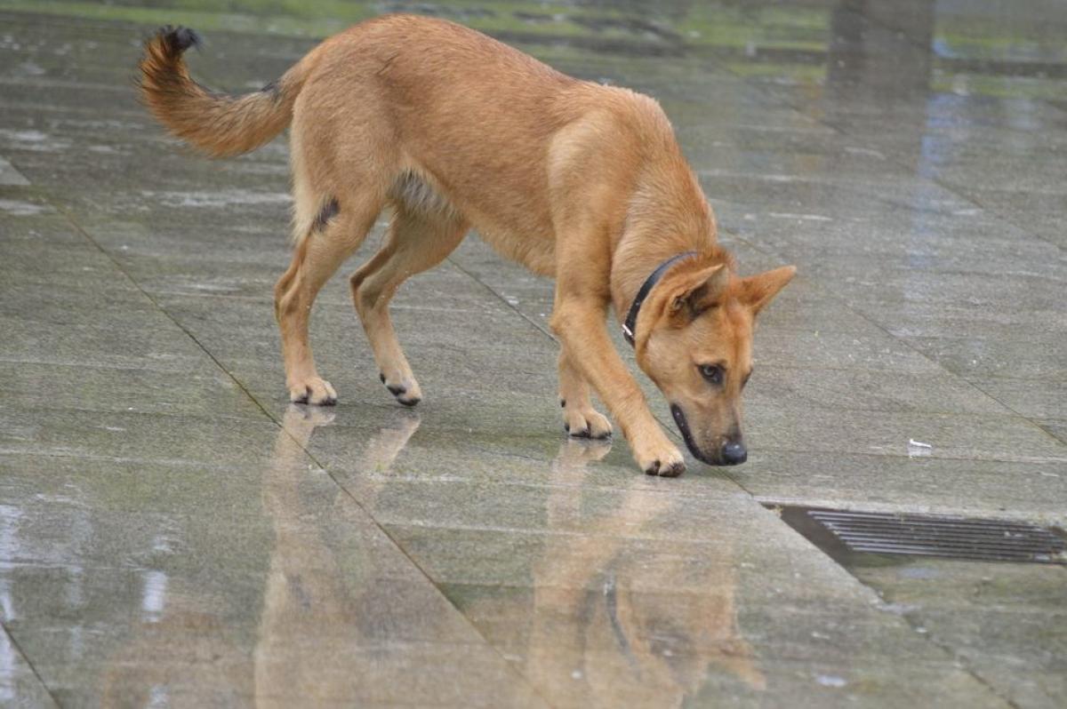 New Hampshire: ChóChinook. Loài chó kéo xe là giống chó có nguồn gốc ở bang New Hampshire.