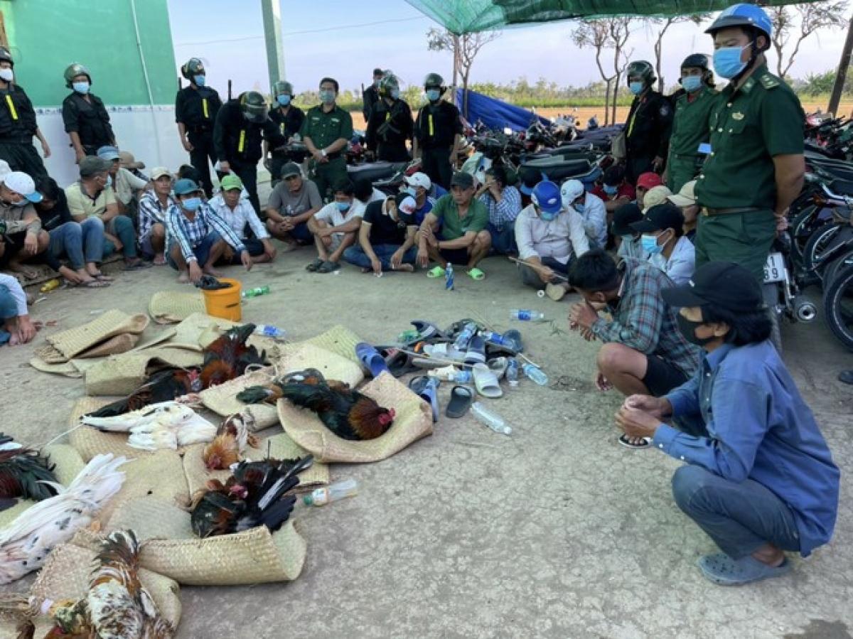 Lực lượng chức năng triệt phá trường gà tại huyện Gò Công Đông