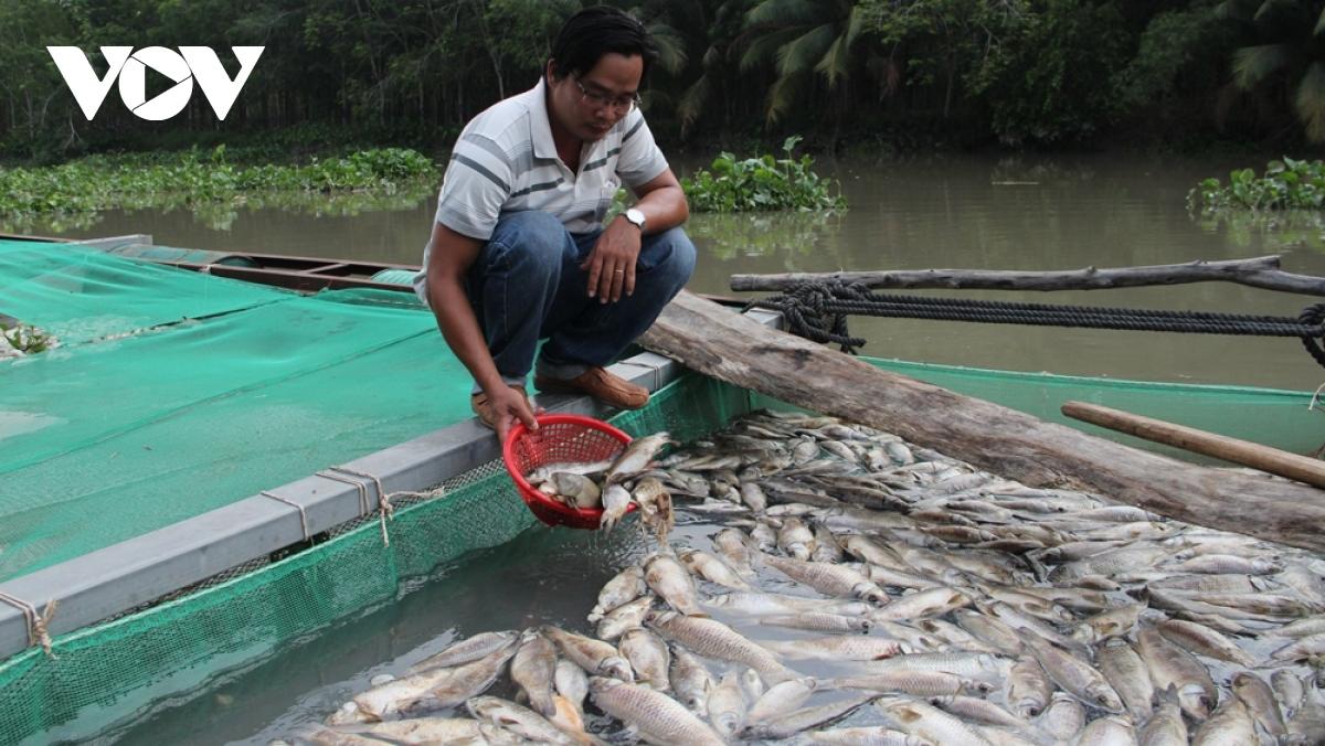 Cá chết ở huyện Dầu Tiếng, tỉnh Bình Dương