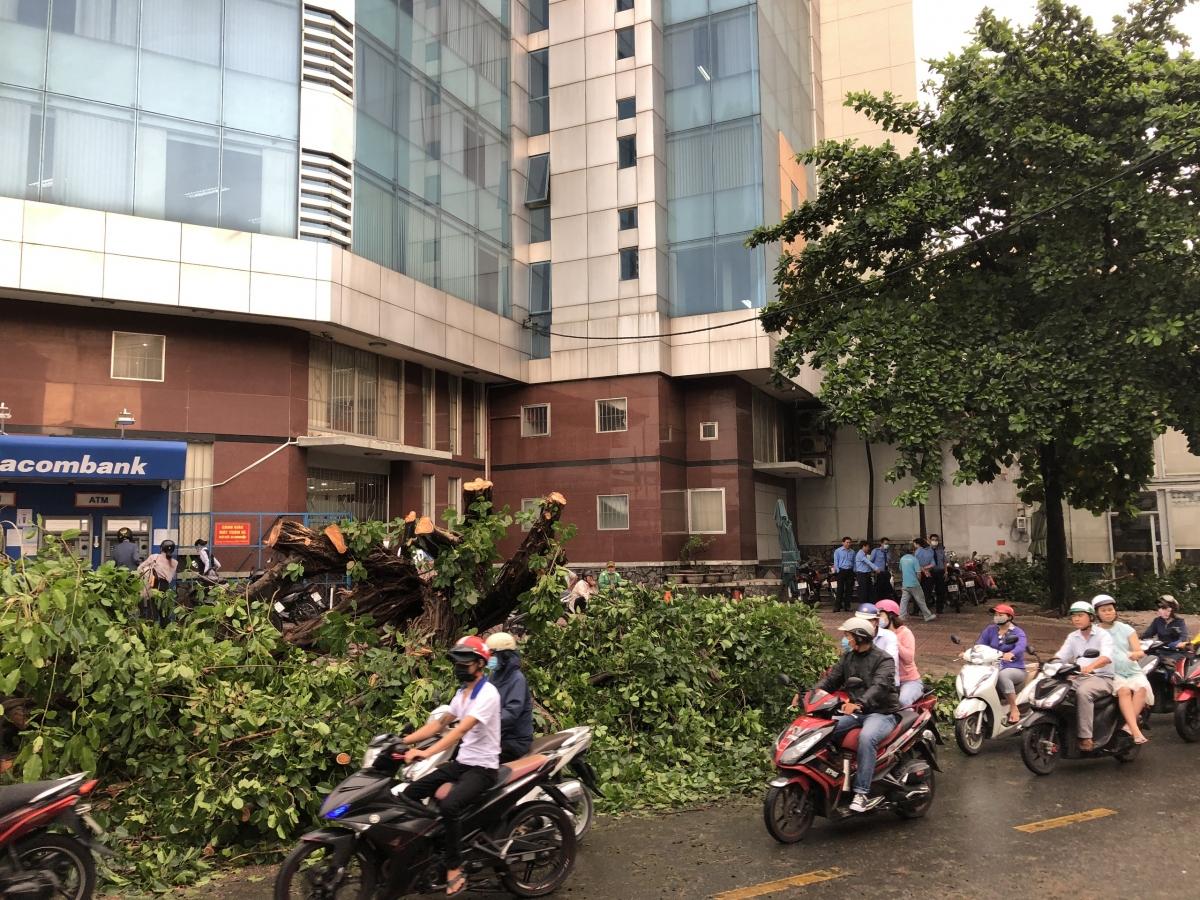 Nhân viên cây xanh đang xử lý hiện trường một cây lớn bật gốc chắn ngang đường Nguyễn Văn Quá.