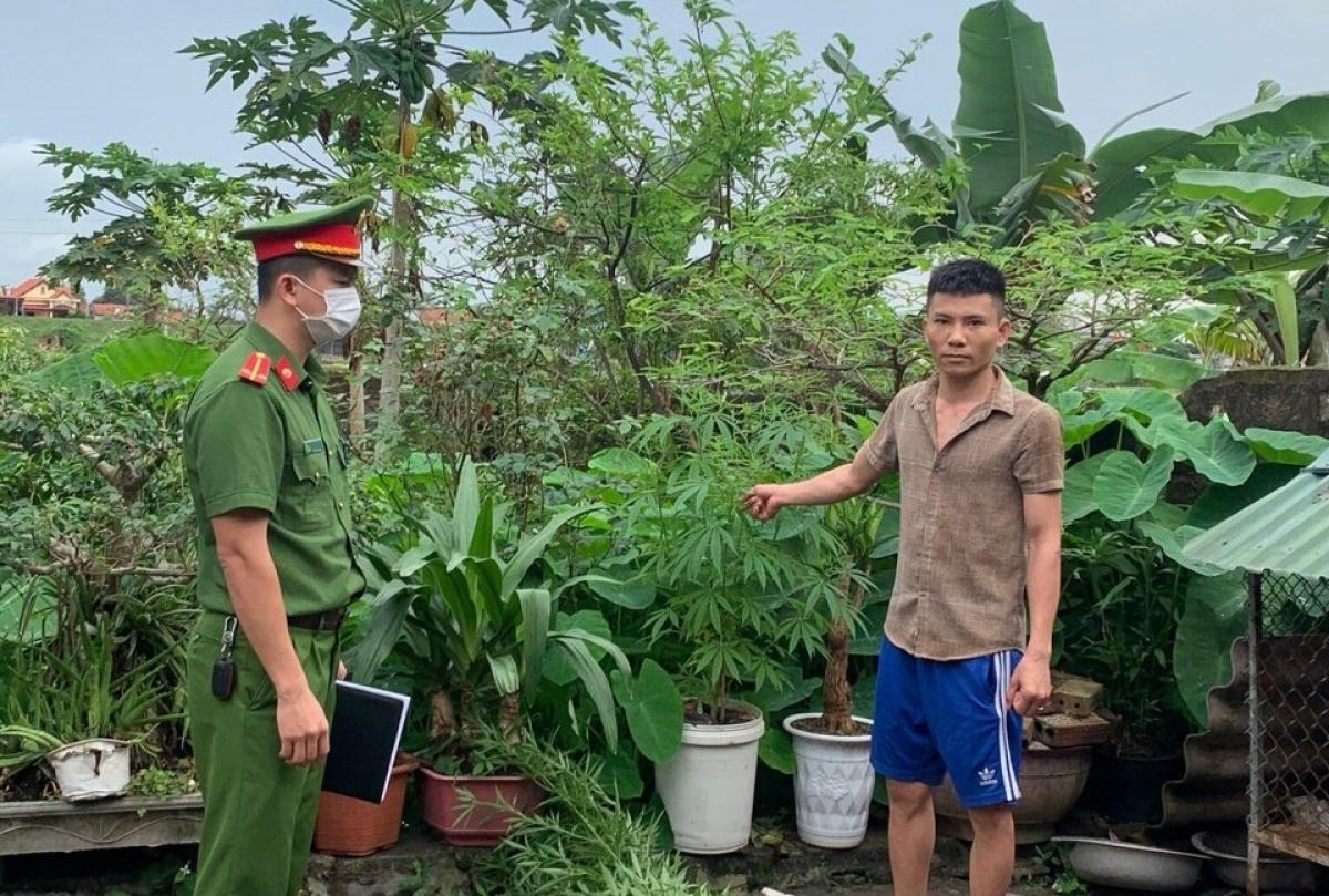 Vũ Ngọc T. khai nhận trồng cần sa để lấy lá sử dụng