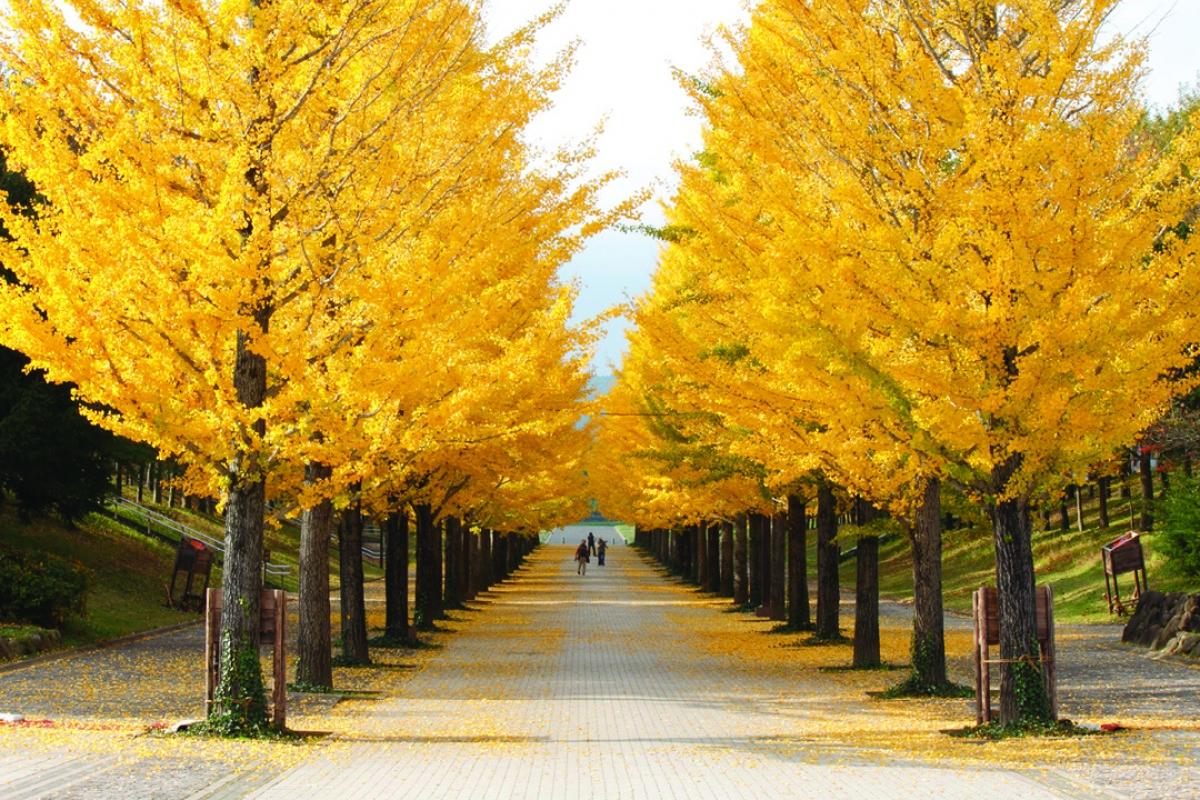 Mặc dù là nơi chủ yếu tổ chức các hoạt động thể thao của tỉnh Fukushima nhưng công viên thể thao Azuma lại có phong cảnh thiên nhiên rất nên thơ. Mùa thu, hàng cây bạch quả trong công viên thay áo với sắc vàng rực rỡ, tạo nên con đường hết sức lãng mạn và thu hút du khách.