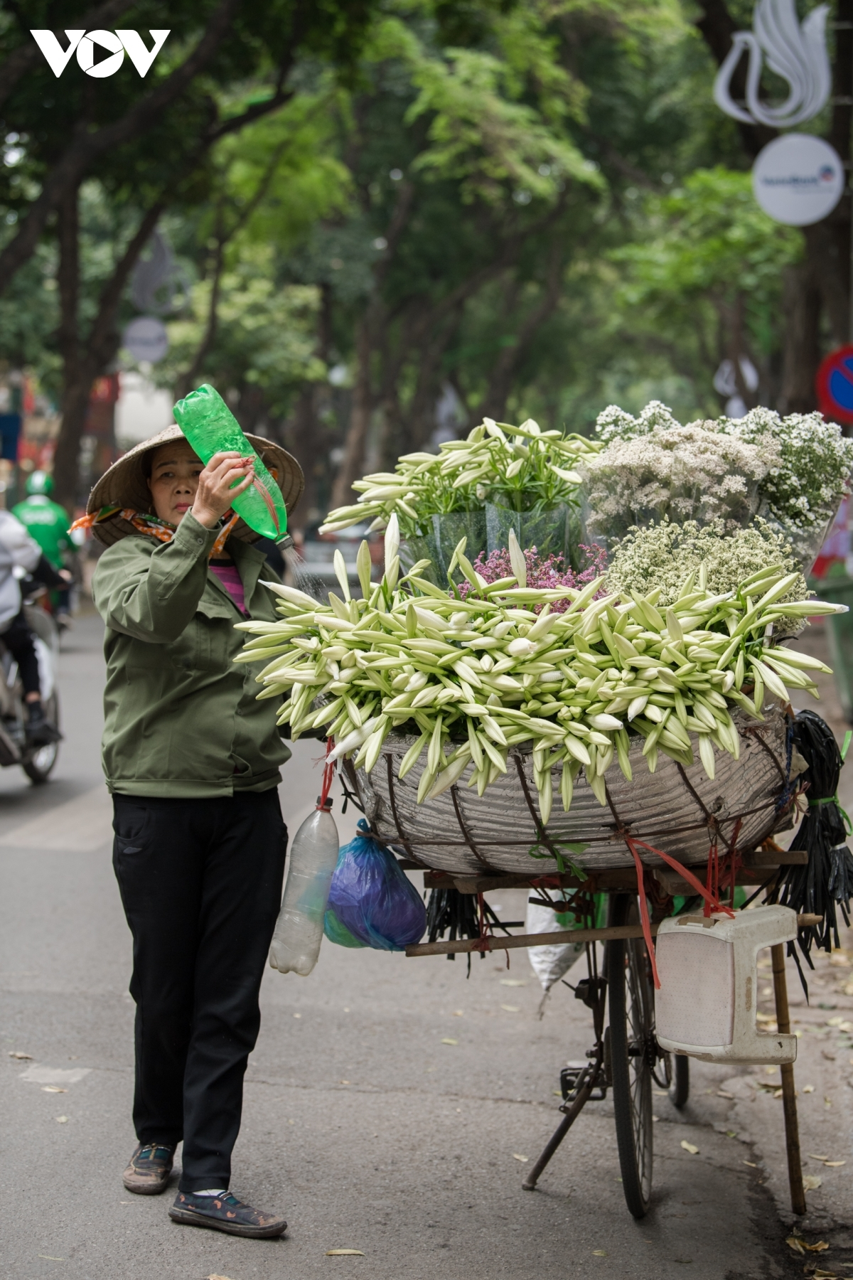 Every corner of Hanoi is blessed with lilies in full bloom in the early days of April.