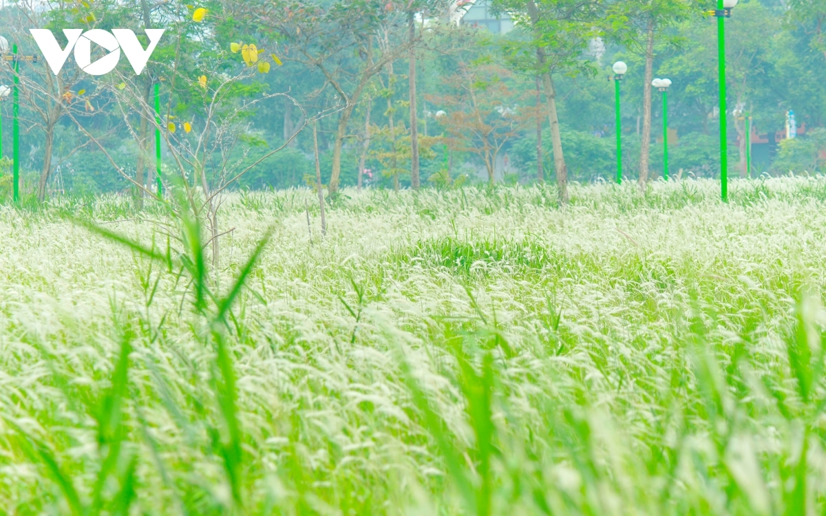 The reed grass typically grows up to the knee, making them easy for many people to pose for photos with.