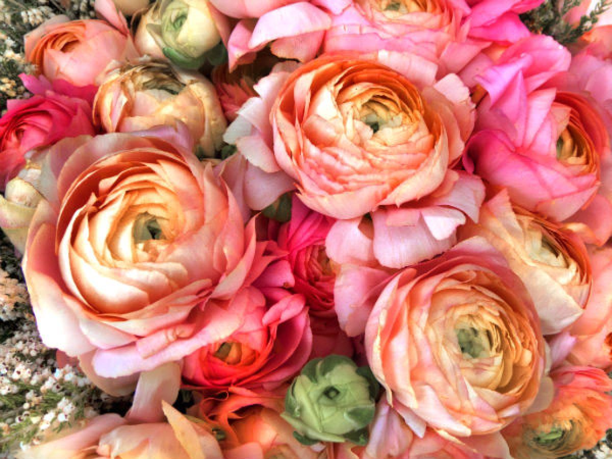 Lợi ích số 2: Khi đến thăm người ốm, ta thường đem theo những đóa hoa thơm để chúc họ mau bình phục. Đây là một phương pháp đã được khoa học chứng minh là có hiệu quả, vì nếu người bệnh cảm thấy vui vẻ khi nhận được hoa, tâm trạng của họ được cải thiện, thì tác dụng của việc điều trị sẽ càng được phát huy.