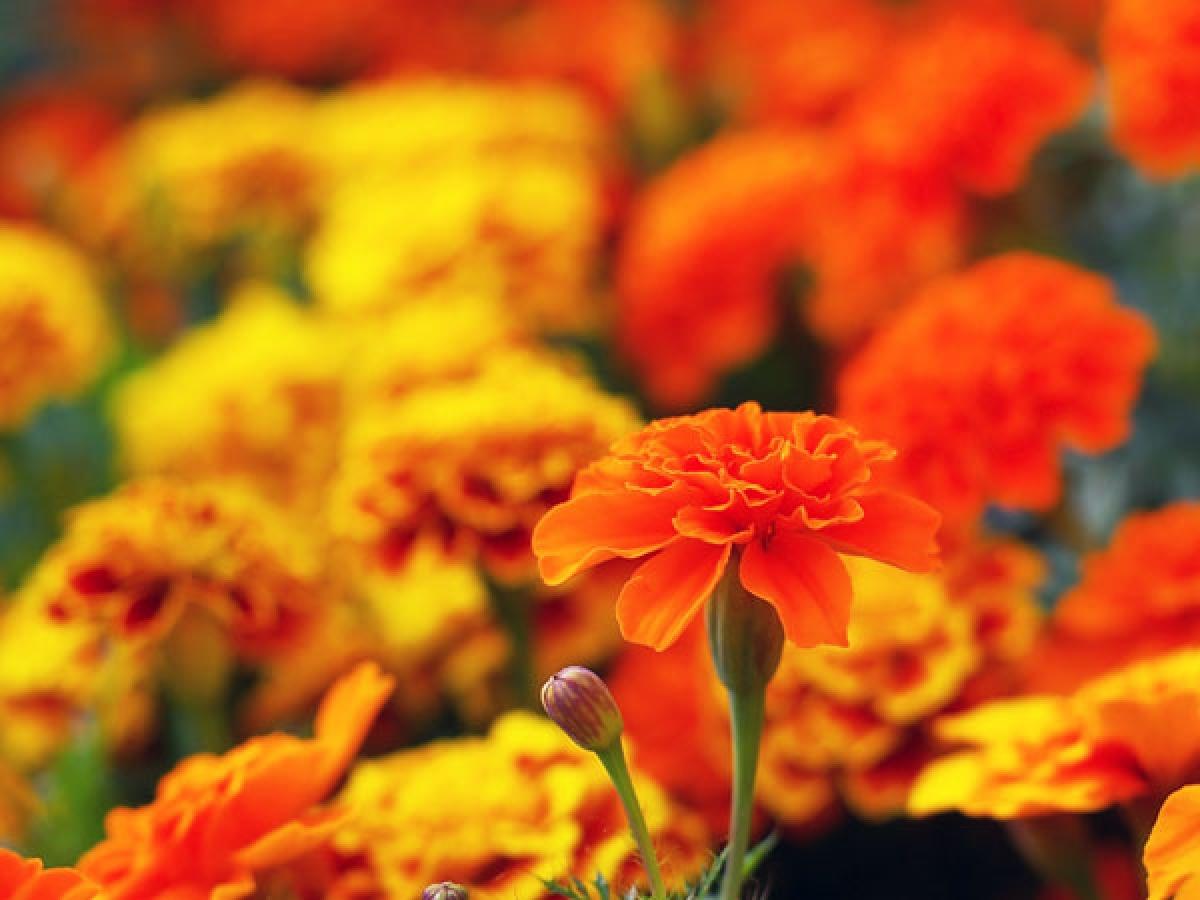 Lợi ích số 6: Một số nghiên cứu cho rằng việc ngắm hoa tươi vào buổi sáng sẽ giúp giảm lo âu và giảm nguy cơ mắc bệnh trầm cảm. Một số loài hoa còn khiến bạn cảm thấy phấn chấn và tràn đầy năng lượng.