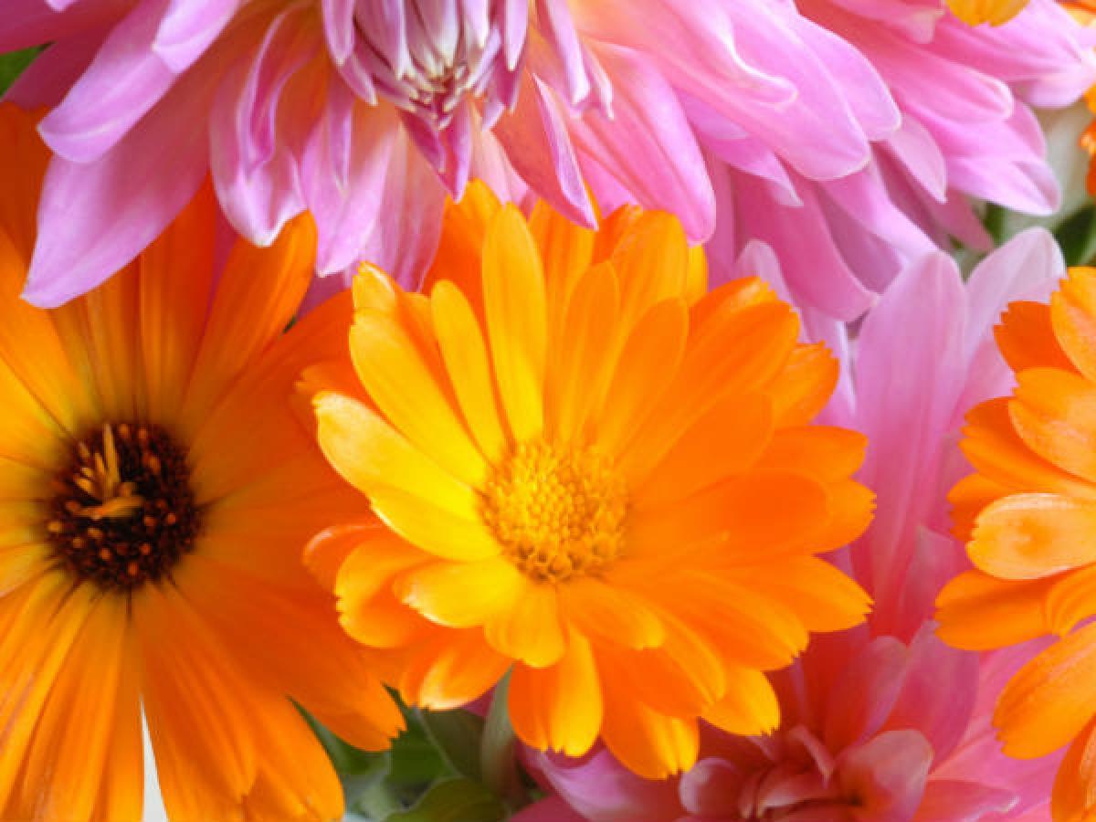 Lợi ích số 7: Ở nhiều nơi, người ta để hoa gần giường ngủ và gối ngủ, bởi hương thơm dịu nhẹ của hoa có thể giúp ta dễ ngủ hơn.