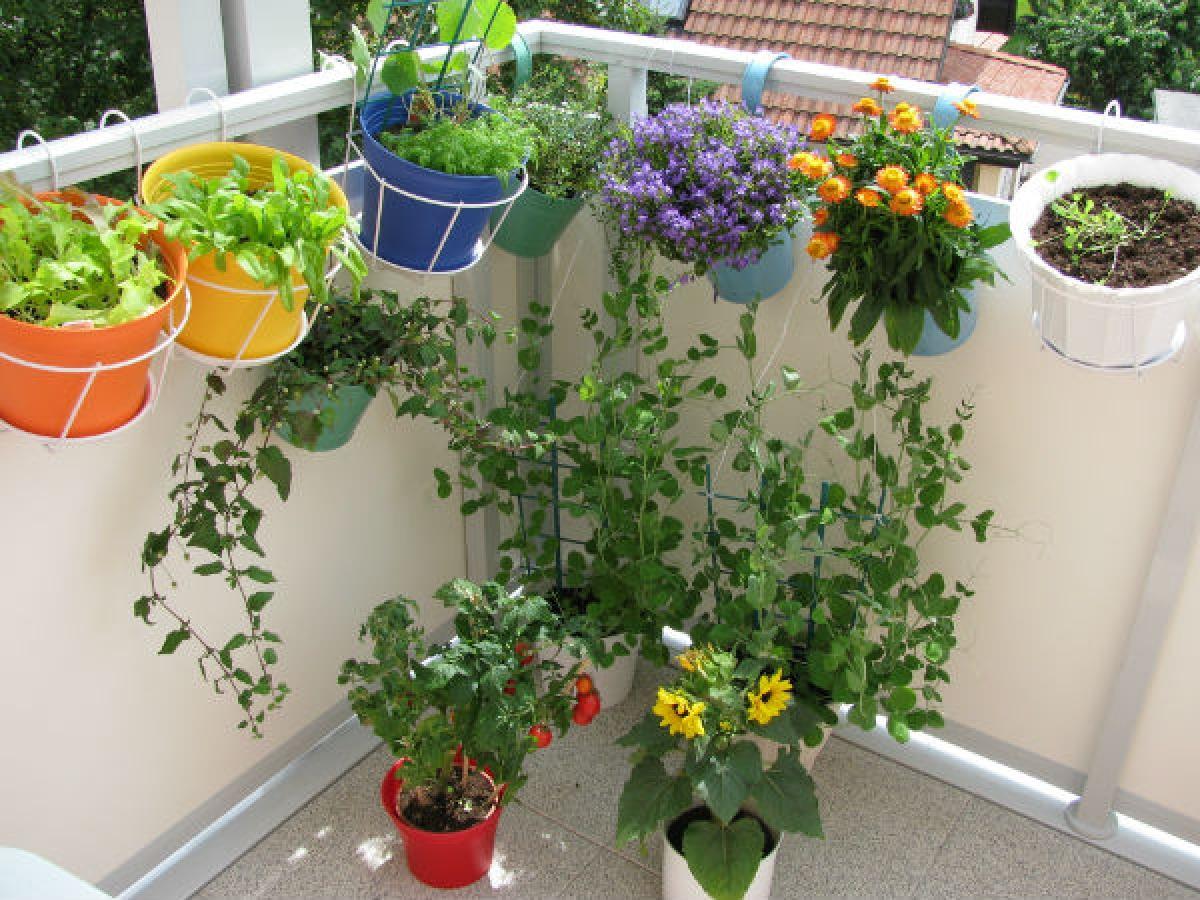 Lợi ích số 9: Các chuyên gia trị liệu công nhận rằng làm vườn là một hoạt động chữa lành. Việc trồng hoa sẽ giúp đẩy nhanh quá trình bình phục của cơ thể, vì hương thơm của hoa giúp tâm trạng của bạn nhanh chóng trở nên thư thái./.