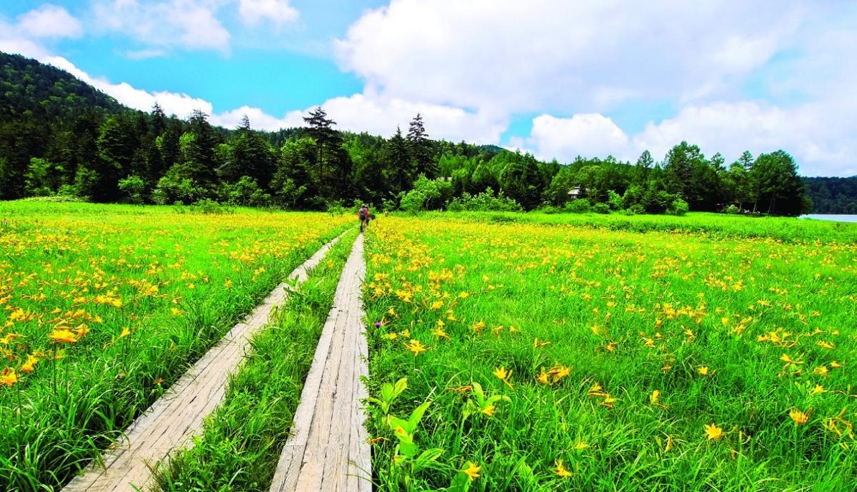 Làng Hinoemata là một nơi tuyệt đẹp dành cho những du khách yêu thíchđi bộ trekking khám phá thiên nhiên. Dưới đầm lầy, những bông cải và hoa lily núi nở vàng rực rỡ và tạo nên một khung cảnh hùng vĩ đến choáng ngợp.