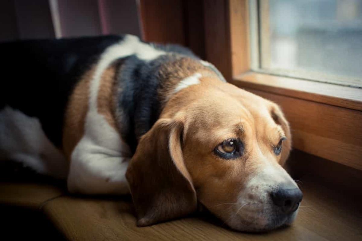 Trong số 12 con chó trên tàu Titanic, chỉ có 3 con sống sót sau vụ đắm tàu.