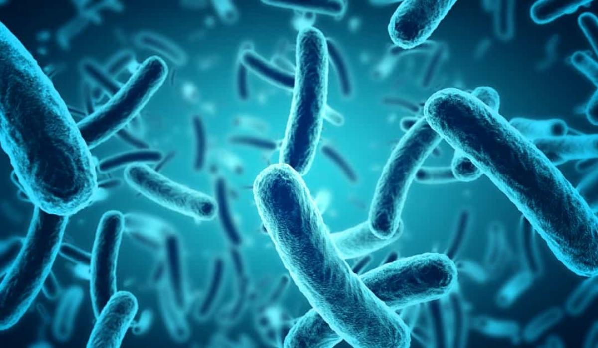 Vi khuẩn đang tàn phá xác tàu Titanic. Nếu không có biện pháp nào được thực hiện, xác tàu sẽ biến mất trong 20 năm tới.