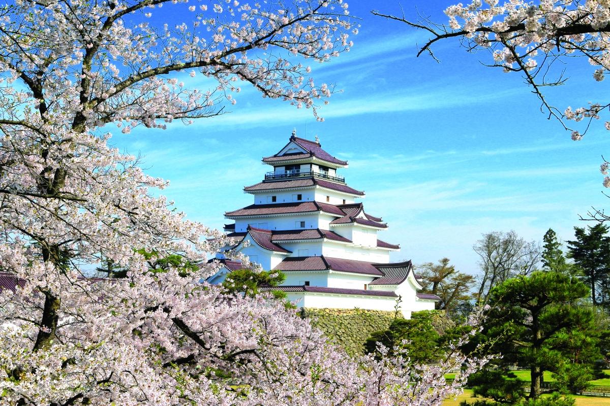 Với khuôn viên gần 1.000 cây hoa anh đào, mỗi mùa xuân đến Thành hạc trắng Tsuruga lại như chìm vào giữa biển hoa. Tòa thành hiện lên lộng lẫy với những bức tường trắng muốt, mái ngói đỏ đặc trưng hài hòa với sắc hồng tươi thắm hoa anh đào. Nơi đây được xem là một trong những điểm ngắm hoa anh đào đẹp nhất ở Nhật Bản