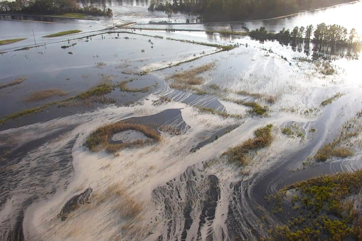 Nước xả thải ở khu vực gần Wilmington ở phía Bắc Carolina.