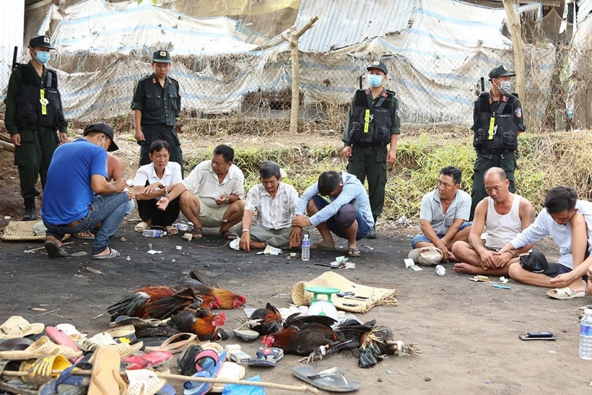 Nhiều đối tượng đá gà ăn tiền tại huyện Gò Công Đông bị tạm giữ