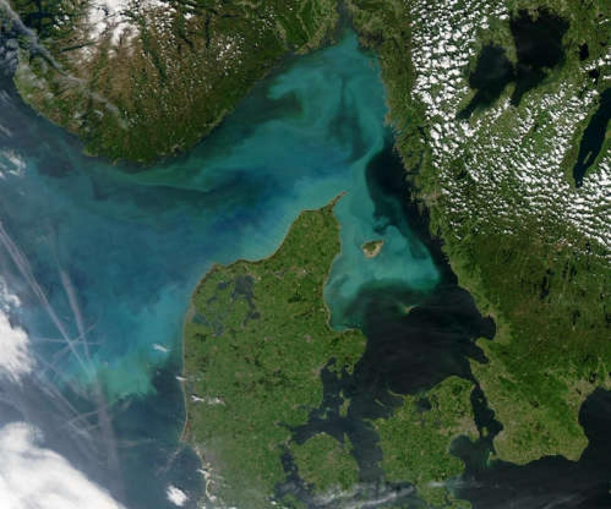 Thực vật phù du là có thể trải rộng hàng trăm km và đôi khi chúng phát triển trên quy mô lớn tới nỗi chúng ta có thể nhìn thấy từ không gian./.