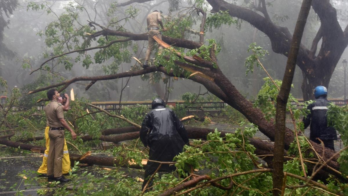 Hoàn lưu bão Tauktae khiến nhiều cây bị đổ tại thủ phủ Panaji của bang Goa chiều 16/5. (Ảnh: ANI)