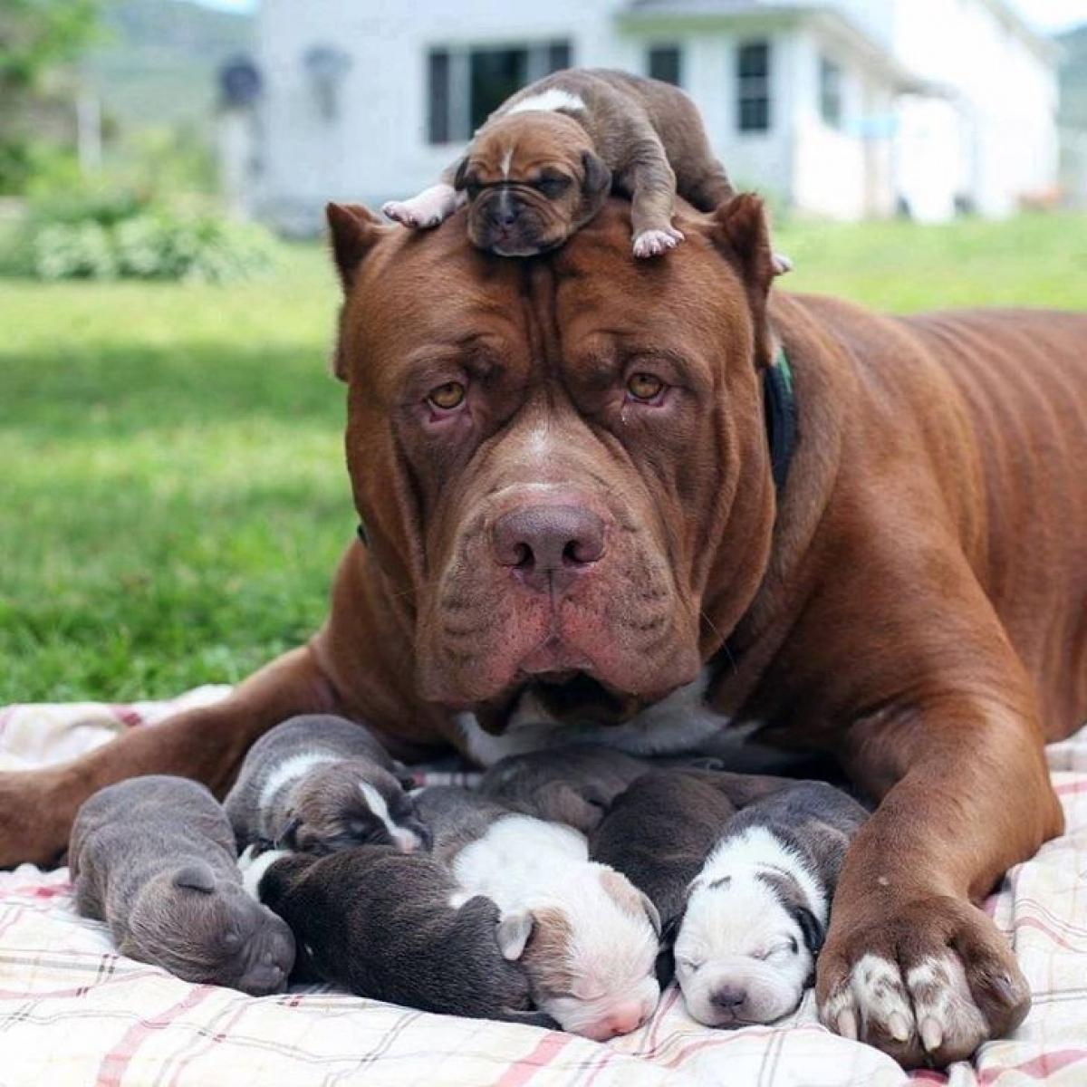 Bình thường thì nhìn cũng hung dữ lắm nhưng lúc làm mẹ thì hiền khô.