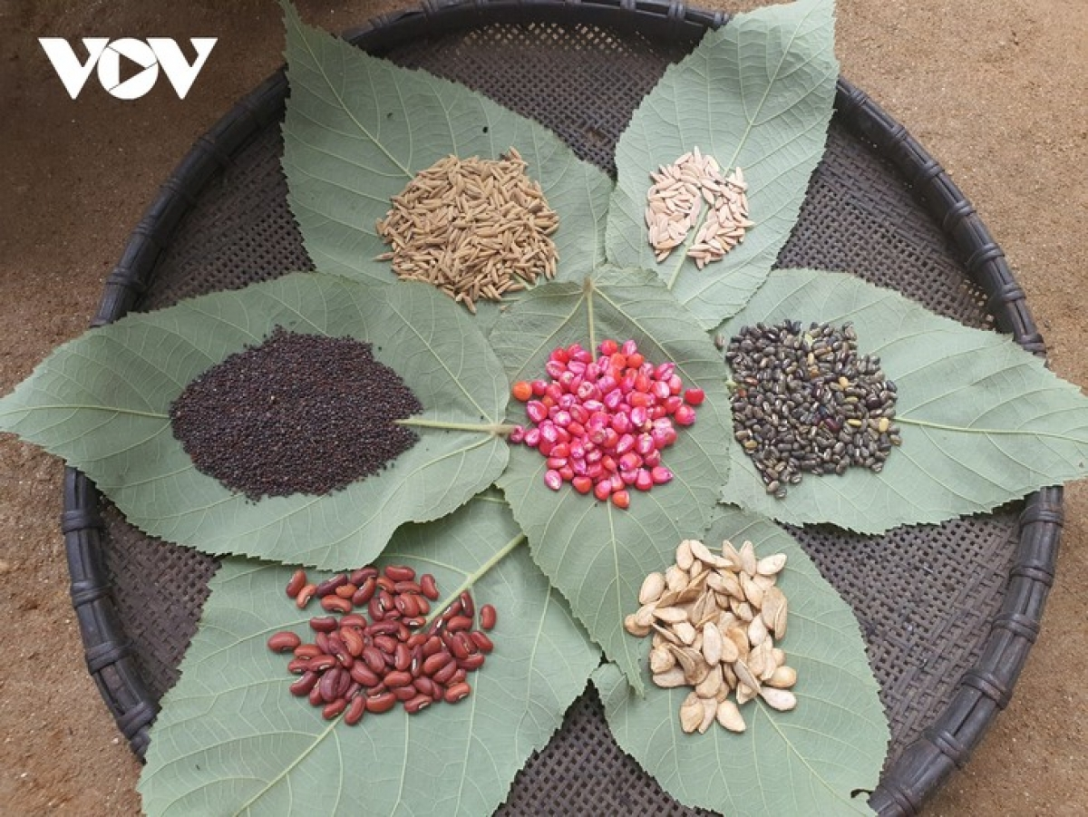 The Red Dao prepare seeds to roast.
