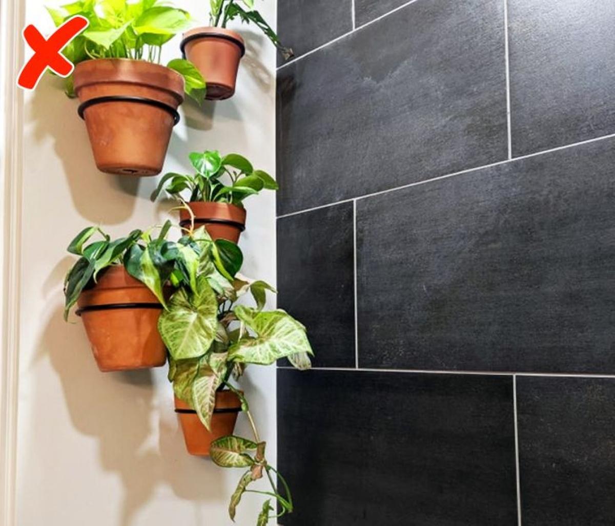 Nếu nhà tắm của bạn thoáng khí và tràn ngập ánh sáng tự nhiên, bạn có thể trồng cây. Còn nếu không muốn cây chết dần chết mòn, bạn hãy lãng quên việc trồng cây trong nhà tắm đi.