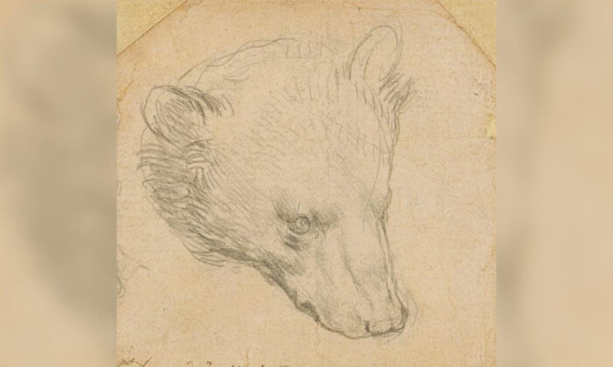 "Bức họa ""Đầu gấu"" của Leonardo Da Vinci. (Ảnh: The Epoch Times)"