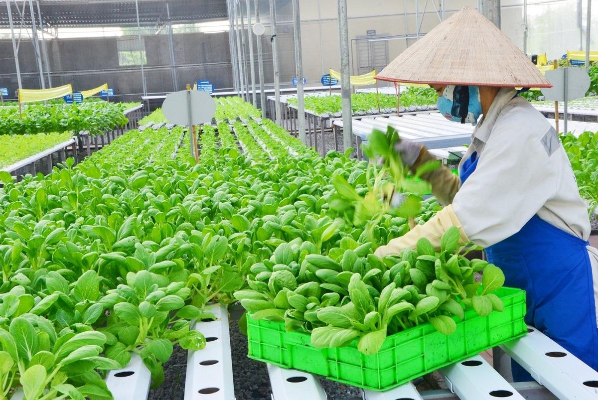 Theo Dự thảo Chiến lược phát triển trồng trọt đến năm 2030 tầm nhìn đến năm 2045, trồng trọt sẽ là ngành sản xuất chủ lực của nông nghiệp (Ảnh minh họa: KT)