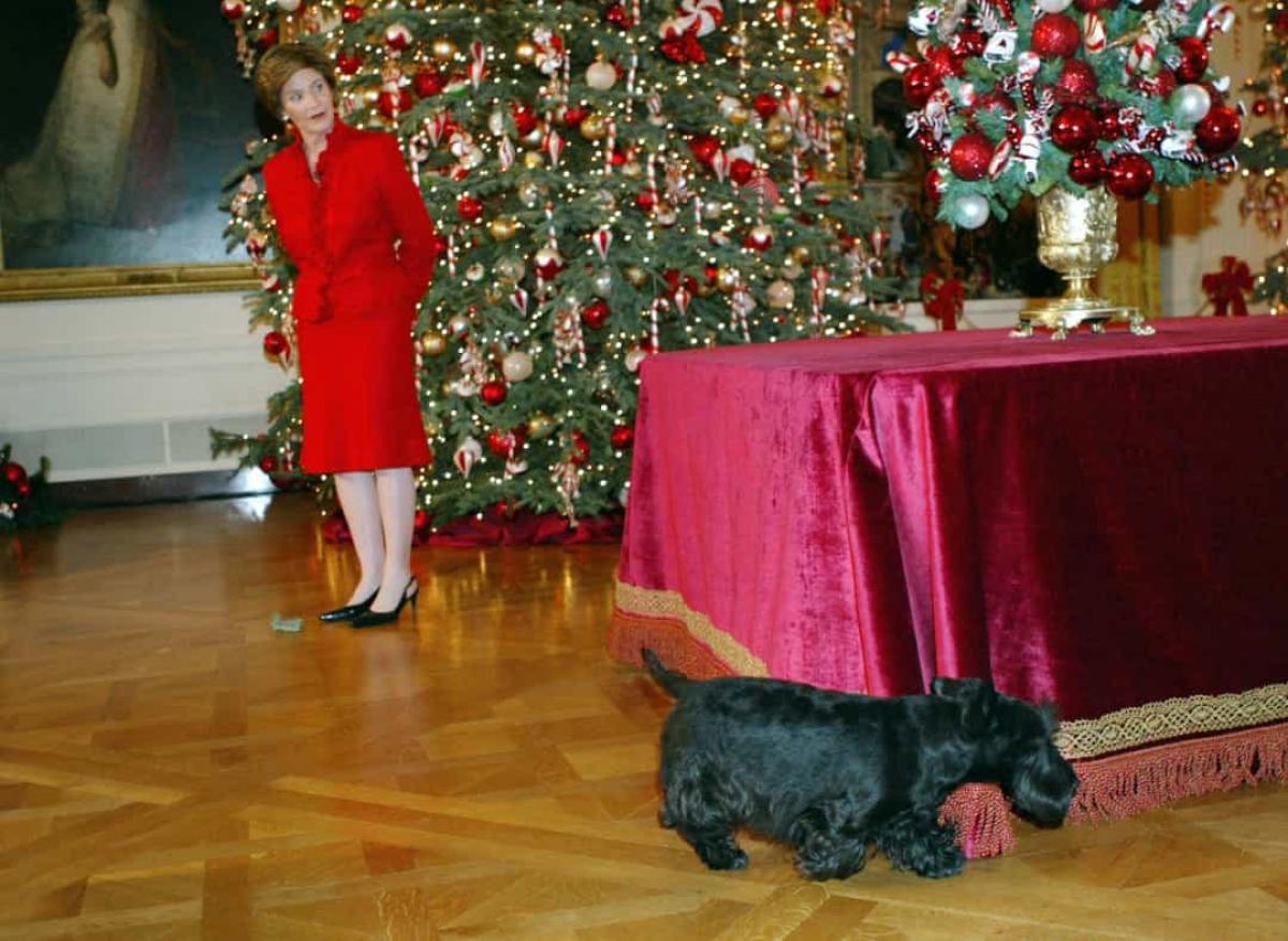 Những vết bẩn trên thảm tại Nhà Trắng không được làm sạch kịp thời. Jodi Kantor, người viết tiểu sử về gia đình ông Obama tiết lộ rằng, khi cựu tổng thống chuyển đến, vẫn còn vết bẩn trên thảm do những chú mèo của ông George W. Bush để lại.