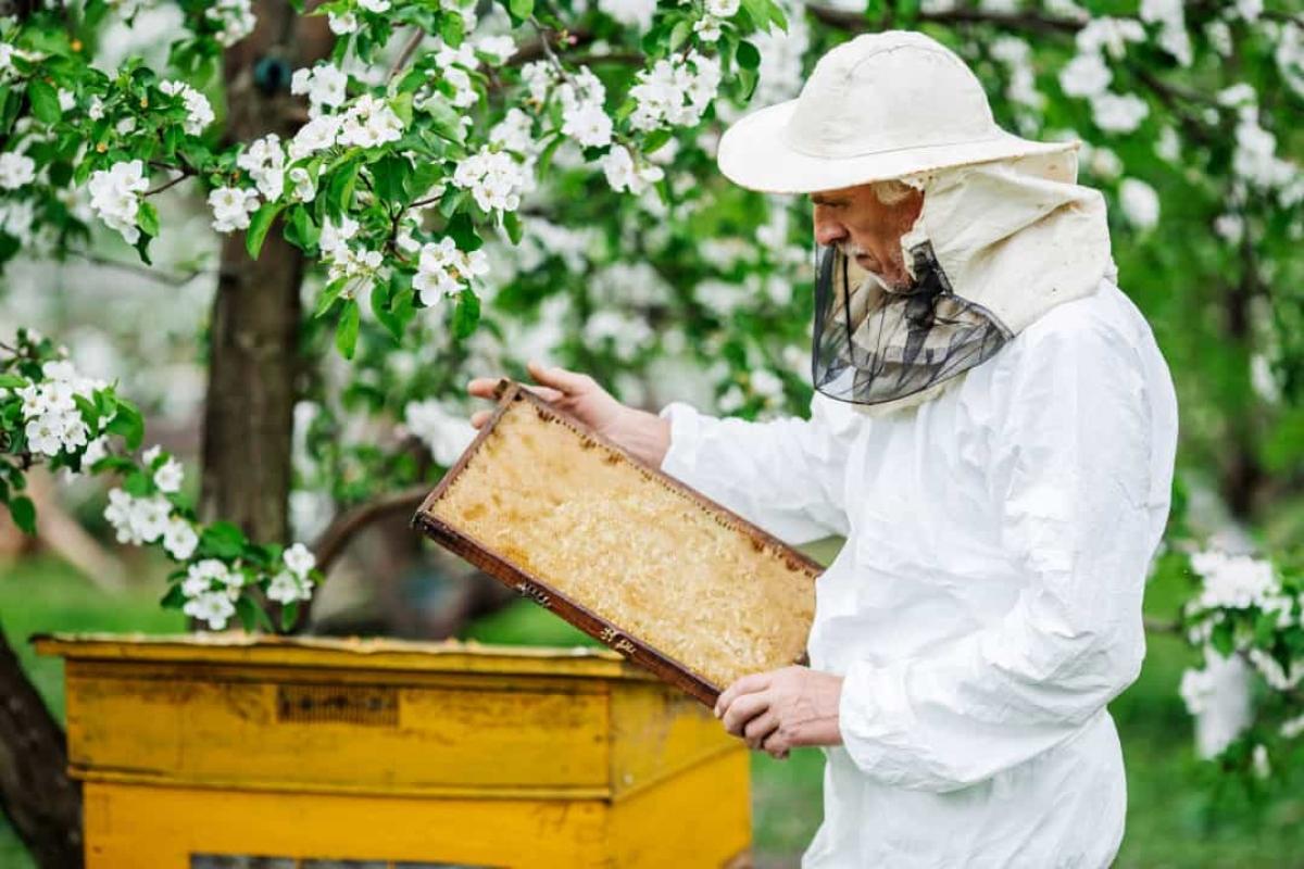 Mật ong của Nhà Trắng được lấy từ một tổ ong trong khuôn viên dinh thự. Tổ ong là nơi chứa hàng nghìn con ong và được người nuôi ong chăm sóc.