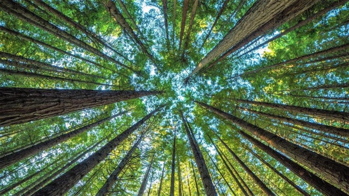 Diện tích rừng-lá phổi của hành tinh đang bị giảm một cách nhanh chóng. (Ảnh: gannett-cdn.com)