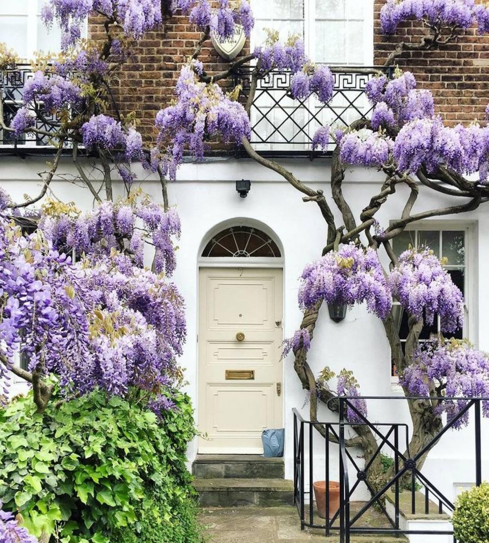 Nhiếp ảnh gia người Anh Bella Foxwell đã đi khắp London để chụp lại vô số những khung cửa ra vào tuyệt đẹp.
