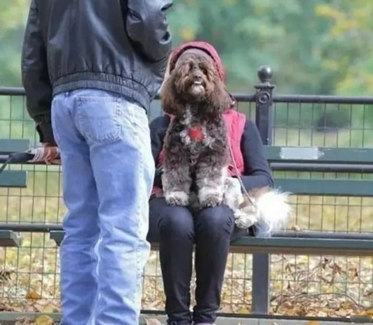 Bức ảnh này trông giống như một người có khuôn mặt của chú chó.