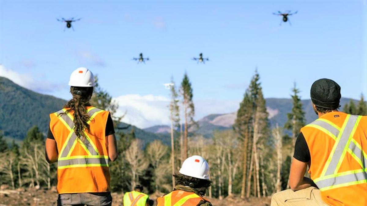 Trồng rừng bằng drone có nhiều ưu việt hơn so với các phương pháp truyền thống. (Ảnh: standard.co.uk)