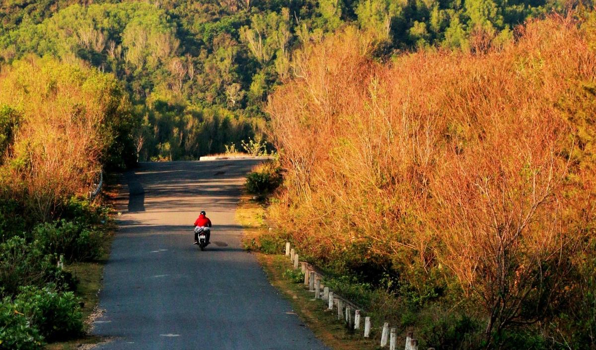 Người đàn ông chạy xe máy trên con đường vào Mũi Điện (xã Hòa Tâm, H.Đông Hòa). Đây được xem là nơi đón ánh nắng mặt trời đầu tiên trên đất liền nước ta. Ánh nắng đầu ngày nhuộm vàng hàng cây hai bên đường tạo ra quang cảnh đẹp mãn nhãn.