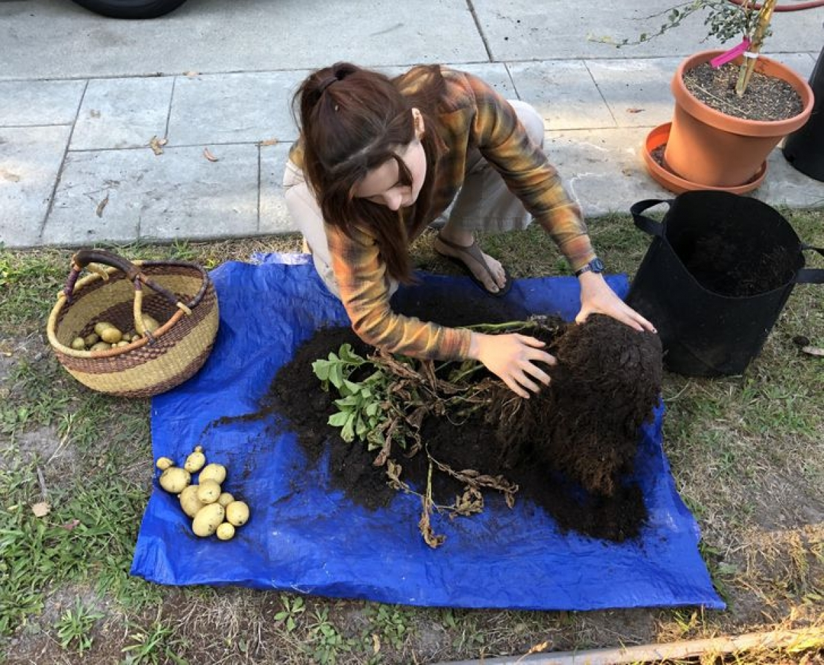 Lúc đầu, tôi nghĩ cô ấy đang vuốt ve một con chó, nhưng thật ra, cô ấy đang thu hoạch khoai tây.