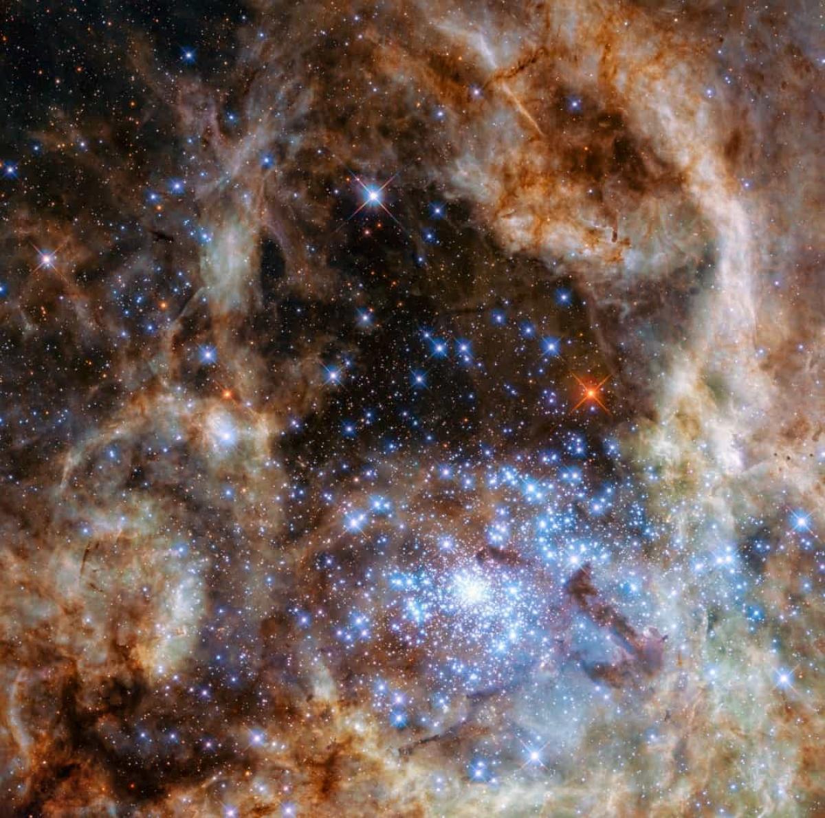 Tinh vân Tarantula có chứa hàng trăm ngôi sao trẻ màu xanh mà trong đó có những ngôi sao lớn nhất vũ trụ từng được phát hiện cho tới nay.