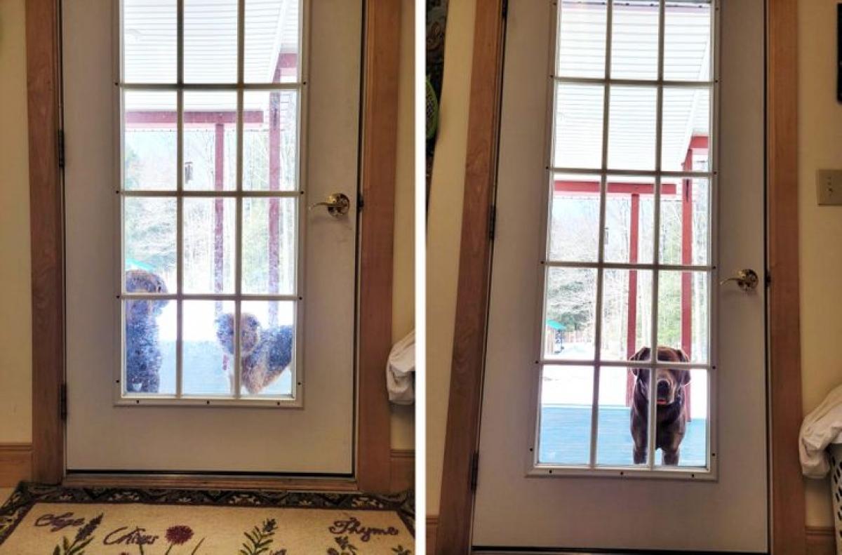 """""""Trước và sau khi lau cửa.Chú cún kia đã phải bỏ đi vì cảm thấy nhàm chánvới việc để quá lâu mới dọn dẹp""""./."""