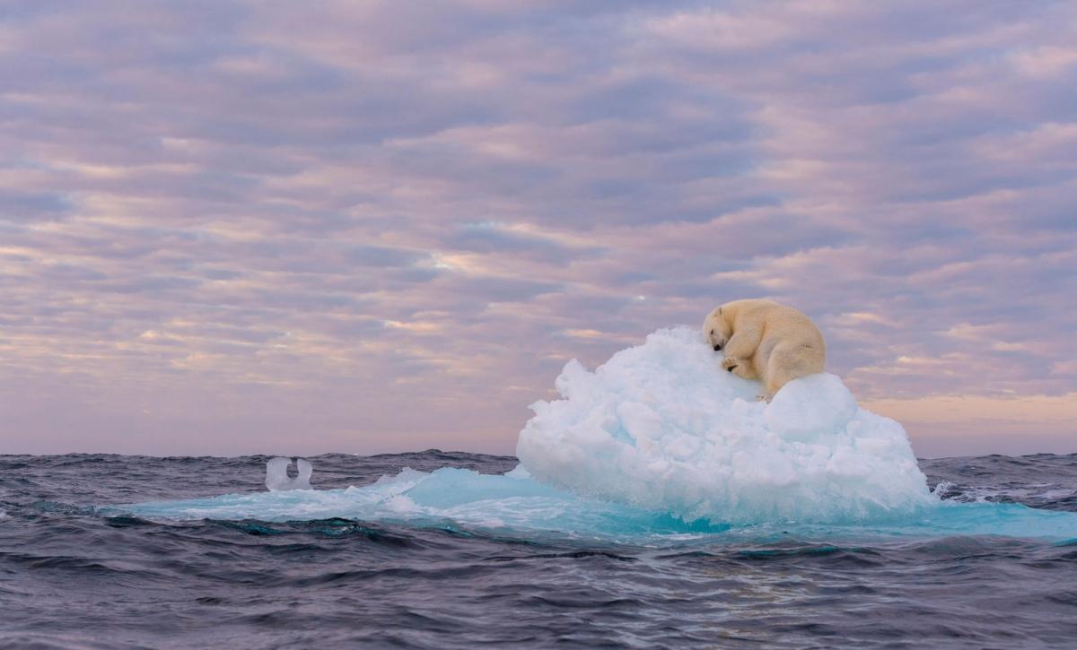 """Bức ảnh """"Kho báu trên băng"""" của tác giả Marek Jackowski chụp tại Svalbard, Na Uy đã ghi lại cảnh một chú gấu Bắc cực đang nằm trên một tảng băng trôi. Khi sự biến mất của các tảng băng do biến đổi khí hậu ngày càng trở nên rõ ràng, những chú gấu Bắc cực đã mất đi môi trường sinh sống của mình. Trong bức ảnh trên, khi chiều tối đến, chú gấu Bắc cực này đã may mắn tìm được một tảng băng nhỏ để trú ngụ qua đêm."""