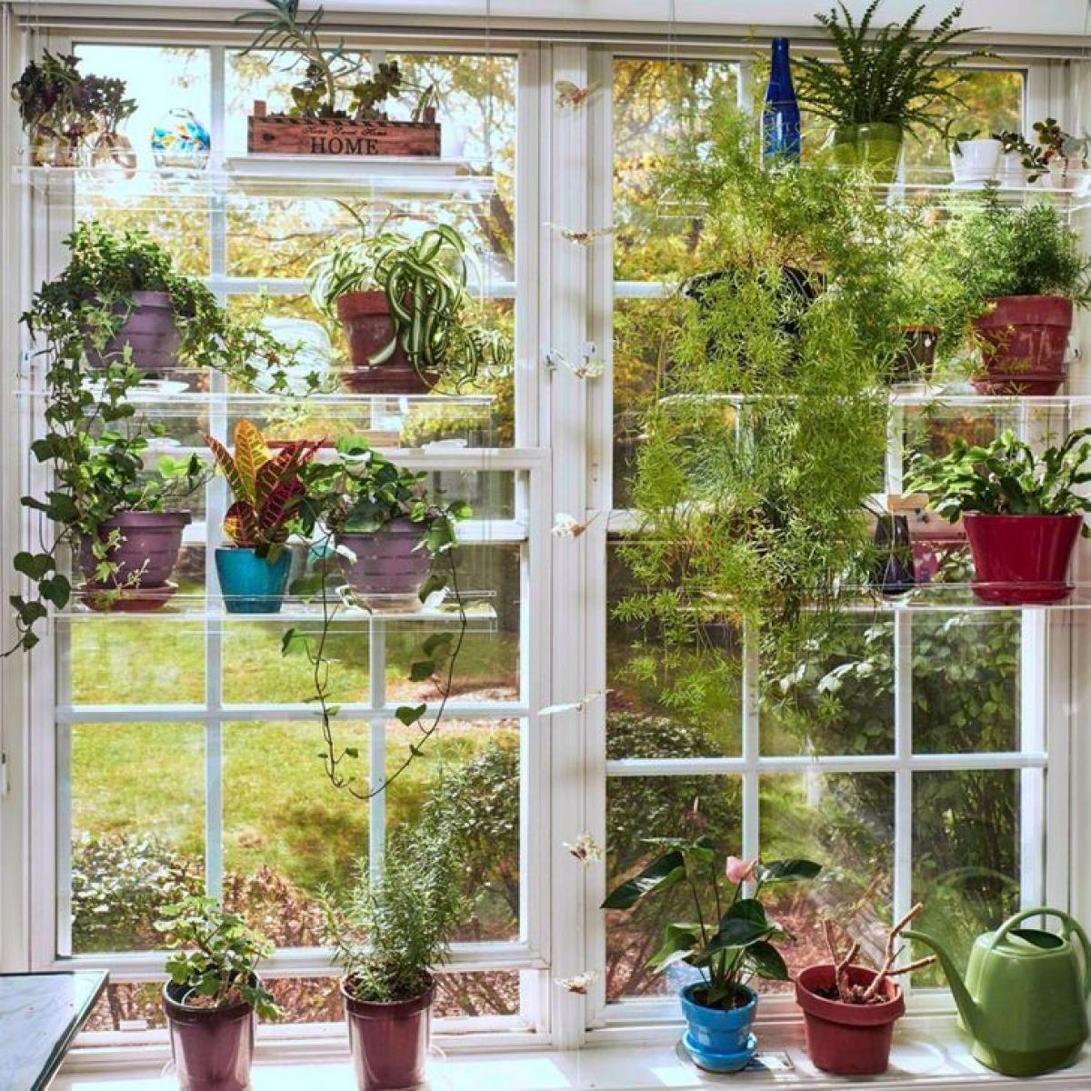 Thực vật: Giải pháp này rất tốt cho những ai thích ngắm nhìn sự tươi mát của cây cối trong nhà. Tất nhiên, chỉ những loại cây chịu nhiệt cao mới thích hợp đặt ở cửa sổ. Nhưng ngay cả những cây cứng nhất cũng có thể không phát triển tốt dưới ánh sáng mặt trời trực tiếp, vì vậy phương pháp thay thế cho rèm cửa này sẽ chỉ phù hợp với các cửa sổ ở phía có bóng râm của nhà bạn.