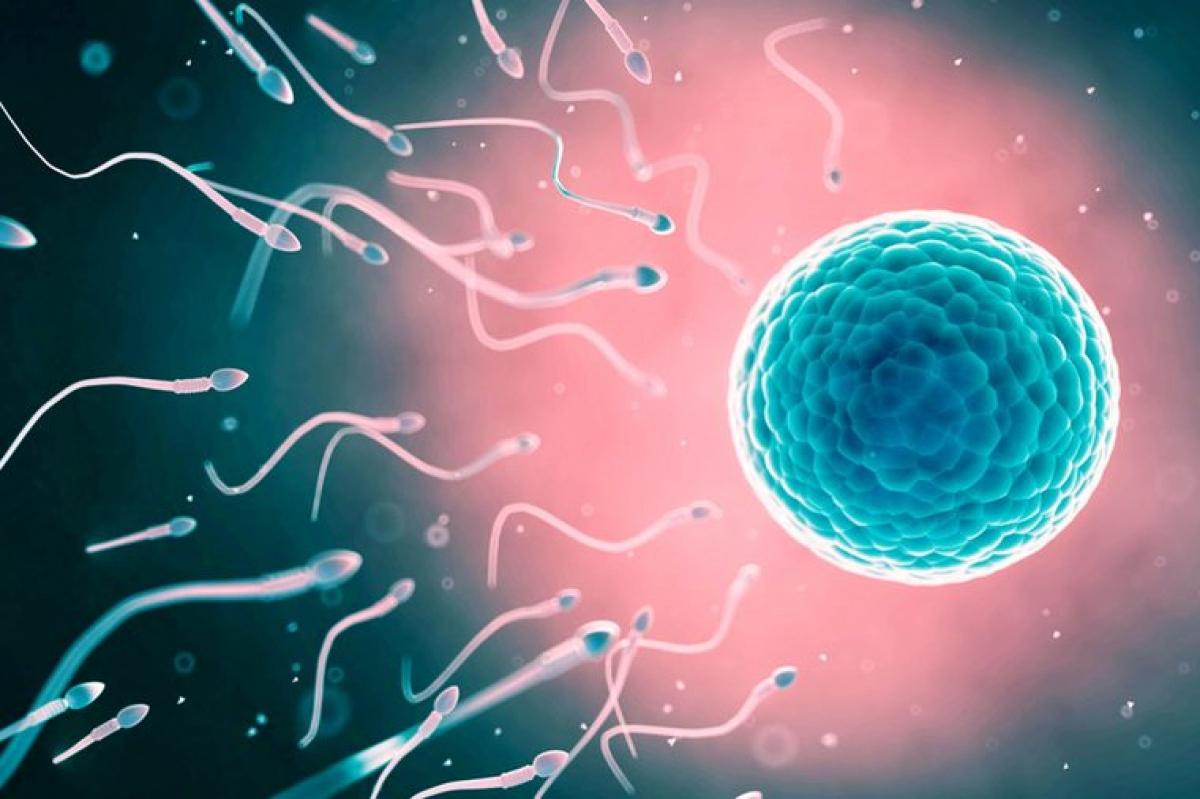 Khả năng sinh sản: Phụ nữ thuộc nhóm máu O có nguy cơ cao gấp hai lần phụ nữ thuộc các nhóm máu còn lại trong vấn đề dự trữ buồng trứng thấp, dẫn đến giảm khả năng sinh sản.