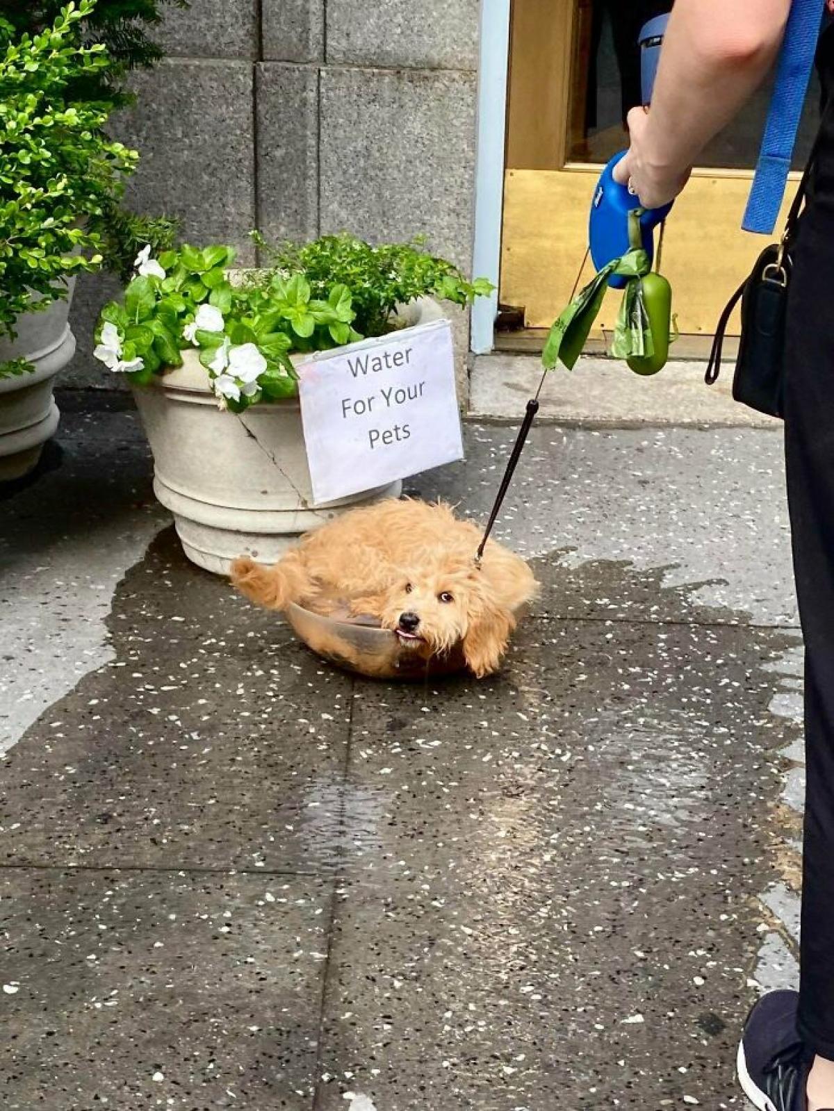 Lời nhắc nhở: Hãy tưới nước cho cún cưng của bạn.