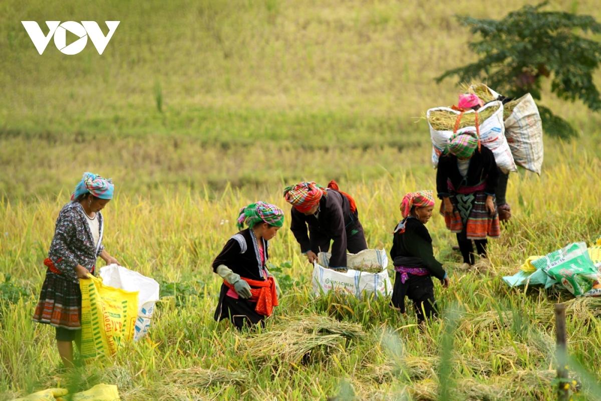 Việt Nam đã hoàn thành sớm mục tiêu Thiên niên kỷ của Liên hợp quốc về xoá đói, giảm nghèo, được cộng đồng quốc tế đánh giá là điểm sáng về giảm nghèo trên thế giới.