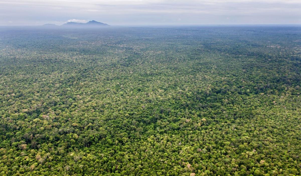 Khu bảo tồn động vật hoang dã Prey Lang. Ảnh: USAID Campuchia