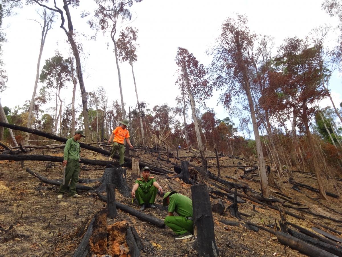 Việc điều tra, xử lý sai phạm liên quan đến công tác quản lý, bảo vệ rừng ở Tây Nguyên đang gặp nhiều khó khăn.