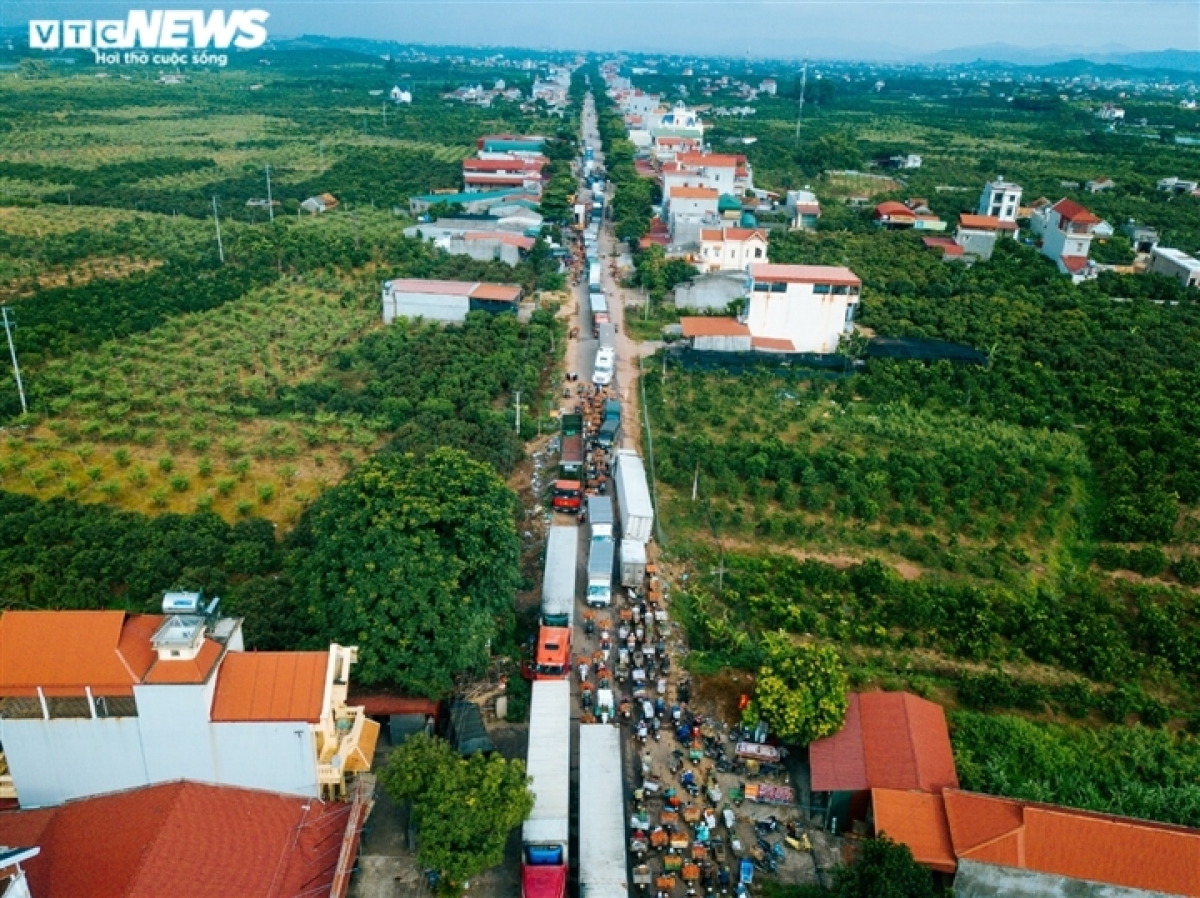 Along a section of highway 31 which passes through Luc Ngan district, lines of vehicles carry baskets of ripe lychees.