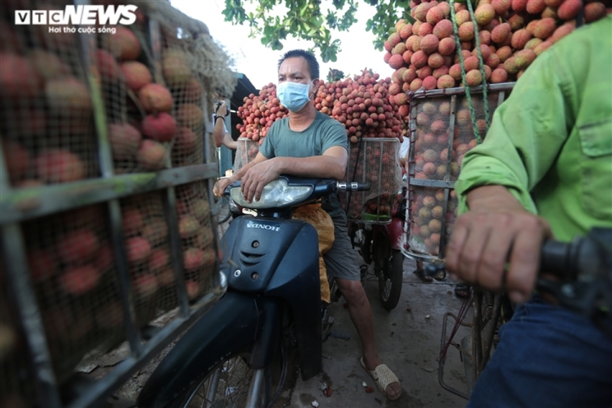Each kilogram of lychees goes on sale at the wholesale market for between VND12,000 and VND18,000.